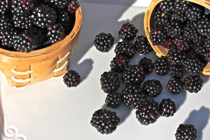 Louisiana Blackberries used in Cajun recipes.