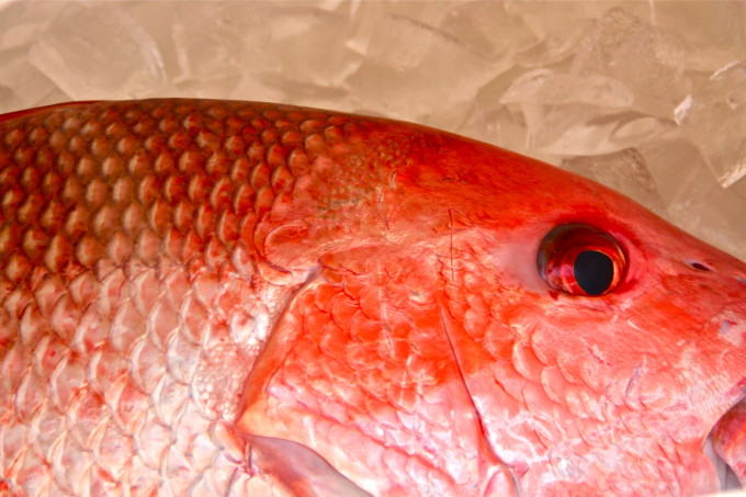 how to cook fresh snapper