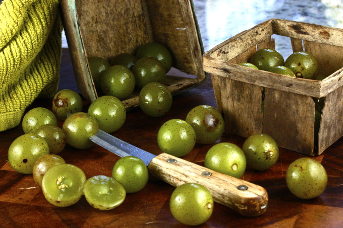 Scuppernongs are a Cajun recipe ingredient.