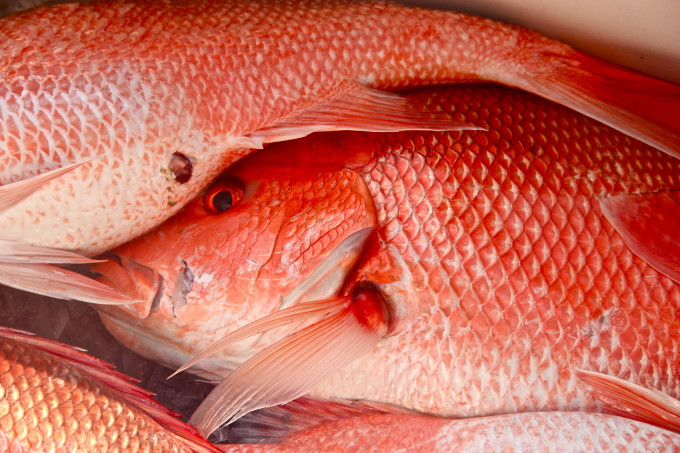 Fresh whole Gulf red snapper is used in my Salt-Encrusted Red Snapper.