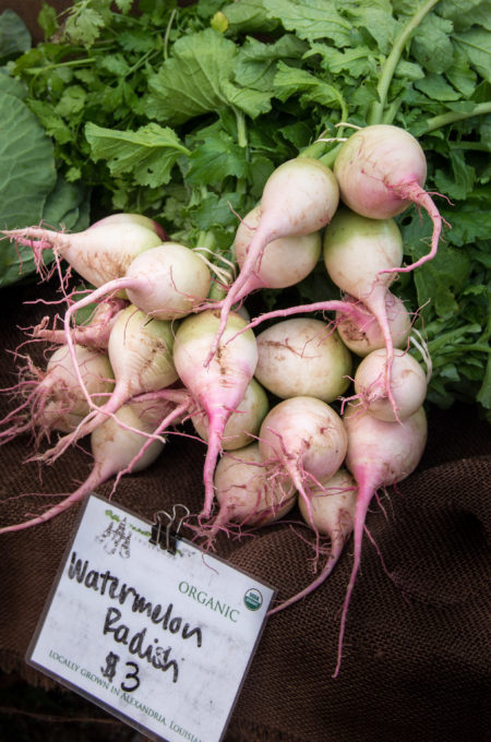 These spicy radishes have a slight peppery twang.