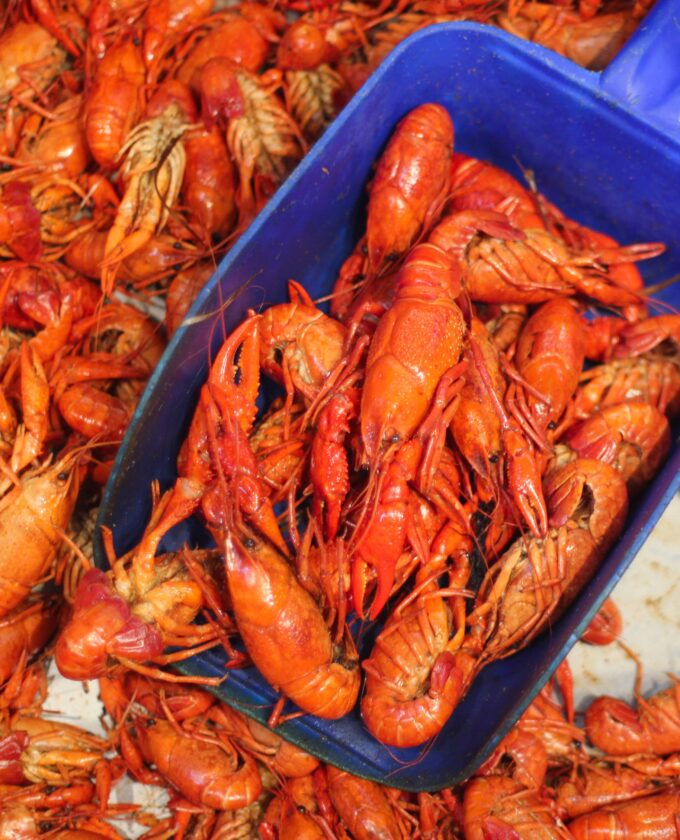 Louisiana crawfish needs your help! (All photos credit: George Graham)