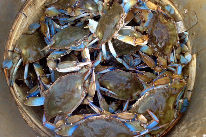 Blue crabs are the mainstay product for Luke's Seafood. (Photo credit: Internet archive)
